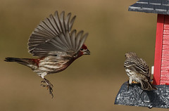 Wild Birds 1 (Largeguy1) Tags: wild nature birds canon lens flying mark iii 150 5d approved tamron 600mm