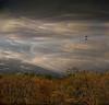 *** (shumpei_sano_exp3) Tags: trees sky bushes firstquality expressyourself abigfave myflickrfriend platinumphoto topofthefog infinestyle texturebytelzey multimegashot hourofthesoul magicdonkeysbest inspiredbylynne