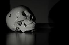 Skull #2|365 (avof.2008) Tags: reflection skull scary nikon teeth bn reflect 365 2365 blackandwithe 365proyect creativeyeuniverse d5100