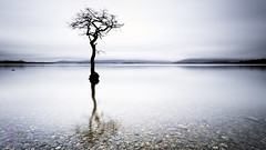 shh i can hear a pin drop (John Farnan Photography) Tags: tree scotland lochlomond millarochybay scottishfineart