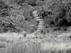 THE MEREST HINT OF GREEN... (Rose Frankcombe) Tags: australia tasmania launceston cataractgorge hintofgreen firstbasin rosefrankcombe