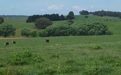 1233 Triangle Flat Road, Bathurst NSW