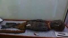 Momia Chinchorro (Hadolevia) Tags: chile old museum skull antigua mummy calavera iquique momias museos momificacin tarapac chinchorro vestigios culturachinchorro museoregionaliquique