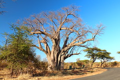 Victoria Falls, Zimbabwe / Zambia. (Cale McMillen) Tags: africa travel bridge elephant tree slr tia river photography eos monkey rainbow south ngc border surfing rapids victoriafalls bungee botswana namibia babboon zambia boabab zambezi lusaka 18135