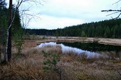 A view from Ilvesreitti track to the southern part of Vähä Salijärvi (Heinola, 20111113) (RainoL) Tags: november autumn lake eh forest finland geotagged fin bog 2011 heinola päijäthäme ilvesreitti 201111 20111113 geo:lat=6116178800 geo:lon=2600415600
