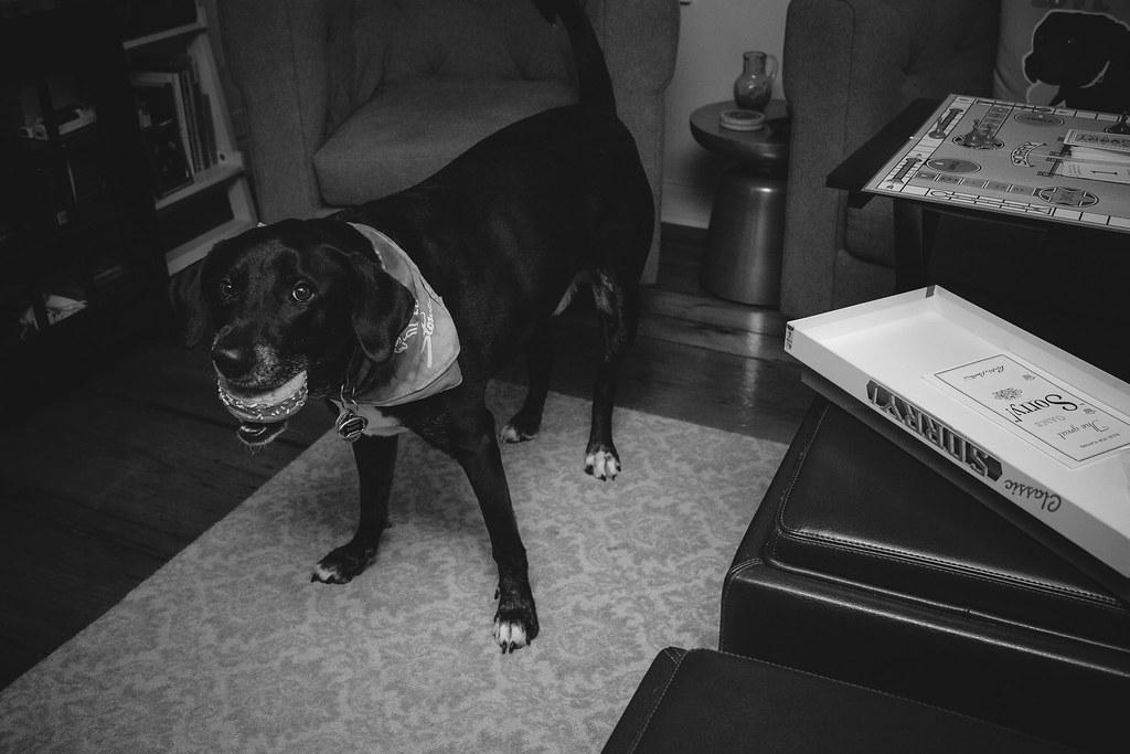 Baloos 5th Birthday 2 Ferrarohaus Tags Dog Cake Boston Puppy Joseph