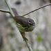 Small Indiana Birds Nature Birds Unitedstates Wildlife Small Indiana Northamerica Deciduous