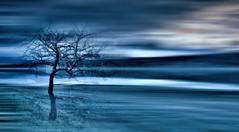 _Azzurro streak_ (* landscape photographer *) Tags: flowers italy europe tramonto mare omega sunsets valle natura basilicata cielo e dio alfa fiori della colori amore fede vita isola gioia onda mondo dono speranza profumo maratea respiro scoglio creazione persempre salvezza ilprimo lultimo martirreno golfodipolicastro parconazionaledelpollino senise nikond90 noepoli salvyitaly lucaniabella lagodimontecotugno valledelsinni tusolosei ilbelgiglio