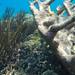 Corais em formas diversas