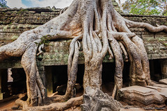 Ancient ruins and tree roots, Ta Prohm temple, Angkor, Cambodia (Dmitry Rukhlenko Travel Photography) Tags: door old travel tree tourism archaeology monument stone wall asian religious temple ancient ruins asia cambodia doors cambodian khmer stones famous religion ruin roots entrance landmark angkorwat tourist architectural doorway portal exit siemreap angkor wat taprohm portals indochina angkorthom placeofworship religiousbuilding