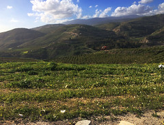 Rolling Hills 3 (Saeed Nassbeh) Tags: winter landscape countryside afterthestorm country jordan greenery jerash  winterend afterthesnow    iphonephotograph   jordancountryside