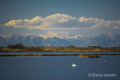 Alps from the sea (s.austinukit) Tags: sea mountains alps montagne swan nuvole atmosfera clowds