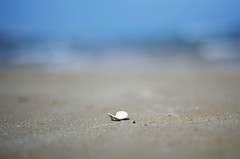 shell on the beach (SS) Tags: blue sea summer vacation italy holiday beach water sand pentax bokeh outdoor shell puglia vieste k5 gargano smcpentaxm50mmf17 ss spiaggiadellascialara