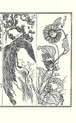 Left  mythical ho-o bird; Right  sunflower and finch (Japanese Flower and Bird Art) Tags: flower sunflower helianthus annuus asteraceae bird hoo finch carduelis fringillidae katsugoro inoue nihonga intaglio picture book japan japanese art readercollection