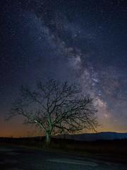 Milky way above Rtanj (ivandragutinovic) Tags: light sky panorama tree night way stars landscape long exposure outdoor sony ivan ngc astro galaxy astrophotography serene alpha milky a7 milkyway polution scorpius rtanj sokobanja dragutinovic ivandragutinovicphotography