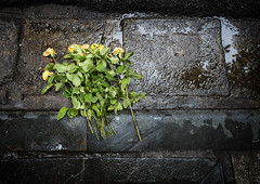 Roses fall, but the thorns remain (Marc Molenaar) Tags: oldquarter flowers deadflowers day