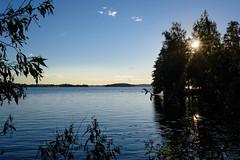 DSC_6285 (vargandras) Tags: lake tree water pyhjrvi hatanp tampere suomi finland sunset sunstar sky viikinsaari pirkkala pereensaari