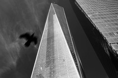 FreedomTowerNYC (ZoilStarPhotography) Tags: newyorkcity downtown buildings skyscraper freedomtower worldtradecenter
