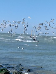 Vogelvrij (Omroep Zeeland) Tags: oostkapelle zeemeeuwen surfers