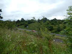 North Wales Expressway, 2016 Jul 11 (Dunnock_D) Tags: road uk trees england green grass forest woodland woods unitedkingdom britain expressway bushes a55 dukesdrive northwalesexpressway
