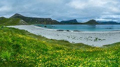 Haukland beach, Lofoten, Norway (B.AA.S.) Tags: flowers camping sunset sea summer sky mountain flower beach nature water norway clouds landscape evening norge meadow july lofoten vann sj 2016 nordland beautyinnature