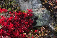 DSC_2116 - 2014-09-21 at 10-53-35.jpg (kitlo59) Tags: høst myrland nærfoto råfiler
