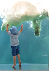 Excited he can reach the floating polar bear. (Betty Olsen) Tags: excited pat bear polar zoo copenhagen boy floating reach small water child