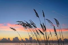 Good Morning - Cocoa Beach (perkijl61) Tags: beach morning sunrise cocoabeach florida seaoats bluesky horizon