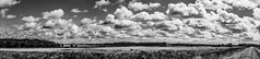 Corn_&_Clouds (PJT.) Tags: sefton lancashire merseyside corn agriculture farming moss peat arable drainage drained reclaimed dyke pathway railway line disused reused cycle path route 62 trees clouds sky front telegraph pole power pano sony a6000