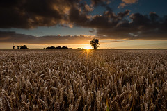 One Tree at Sunset (the governor) Tags: spooky trees sunset wheat fields goldcollection