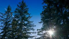 DSC01581_2 (herwig.gnadenberger) Tags: baum bume gegenlicht sonne wald sonnenstrahlen