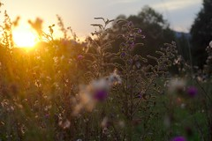 Summer fall () Tags: canonef50mmf18ii canoneos650d    2016  100v10f