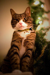 Merry Christmas wishes Silver (patrik.stjerna) Tags: christmas cat merry