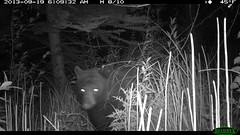 Fall '14 Trail Camera Footage