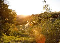 20141206-_G7A9230 (Fomal Haut) Tags: sunset sun japan   su