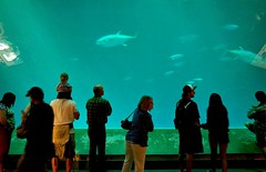 Big Tank (Photographing Travis) Tags: acquarium bay california cameraricohgr fish monterey montereybay ocean sea year2014 2014