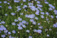 (ddsnet) Tags: travel plant flower japan sony cybershot daisy  nippon marguerite  kansai  nihon  backpackers   awajishima      rx10      hygoken    awajishi flowerinjapan