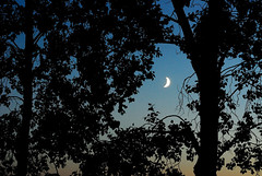 The crescent moon through trees (the factory wall) Tags: trees moon silhouette crescent cans2s