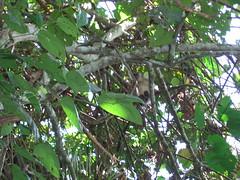 Monkey Up Above