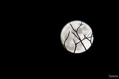 O feitiço da Lua  . Moonspell (selenis) Tags: moon nikon fullmoon lua luacheia 2015 d7100