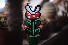 8-bit (Mark Liddell) Tags: cactus plants sunlight plant green window cacti scotland beads video brothers bokeh dundee crafts nintendo pipe arts craft super mario games retro shelf pot pots gaming ledge pixel nes 8bit pixels bros succulents hama perler enemy piranha snes supermariobros