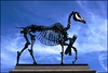 Gift Horse - DSC01574a (normko) Tags: horse london art statue price square skeleton stock hans trafalgar tape gift capitalism fourth exchange plinth share ticker haacke