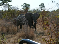 Elephant in our way
