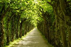 2015 05 15_0835 (fotomotiff) Tags: natur bayreuth allee eremitage weitwinkel bogengang