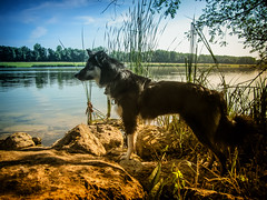 Lisca always on patrol ... (K r y s) Tags: nature outdoor posing extérieur patrol alert lisca basenautique