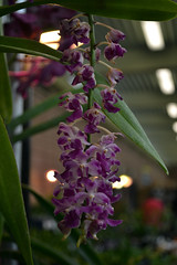 2016-07-23 08766 Orchid Show, SF County Fair Bldg (Dennis Brumm) Tags: sanfrancisco california july 2016 orchids exposition flowers plants bromeliads
