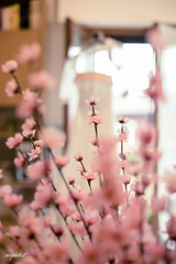 0022 (mrcphoto.it) Tags: pink flowers weddingday preparations beautiful colors senses bokeh light natural 50mmf14 canon photograpy wwwmrcphotoit
