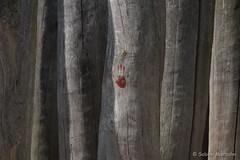 Handwerk (Sockenhummel) Tags: fuji hand kunst holz baumstamm britzergarten xe1