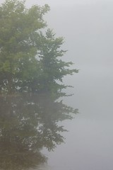 Misty Reflection (FiddleHiker) Tags: morning white mist lake reflection tree green nature weather minnesota vertical fog landscape outdoor symmetry minimal balance minimalism lakealice stateparks williamobrienstatepark