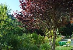 DSC_0982-1 (Chaumurky) Tags: h garden